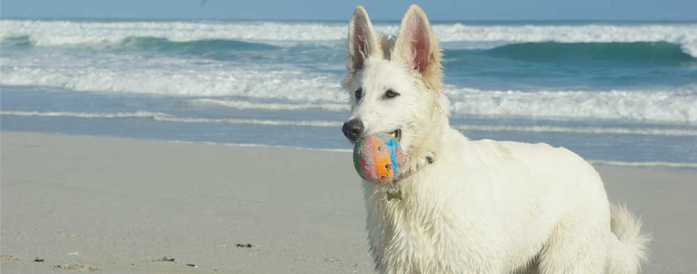 playing-ball-on-the-beach.jpg
